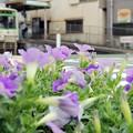 Photos: 花のある街