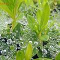 秋雨の恩恵