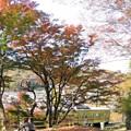 高尾山の晩秋(3)