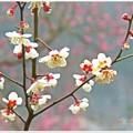 春雨の中で(1)