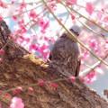 春が来たよ~