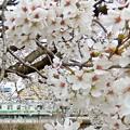Photos: 春を駆け抜ける
