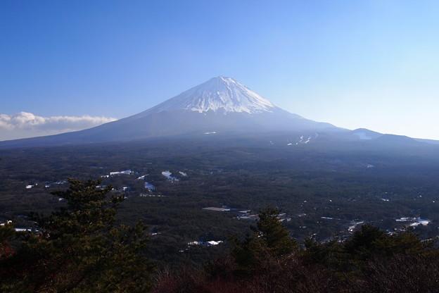 樹海と富士山