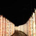 Photos: kimono forest