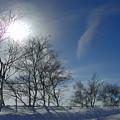 白樺の防風林