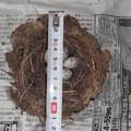 Photos: 放棄された巣と卵