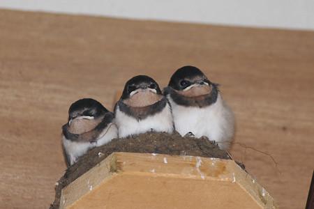 巣の中は居心地が良い