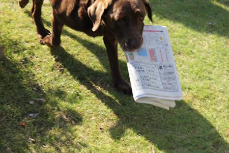 新聞ですよ~
