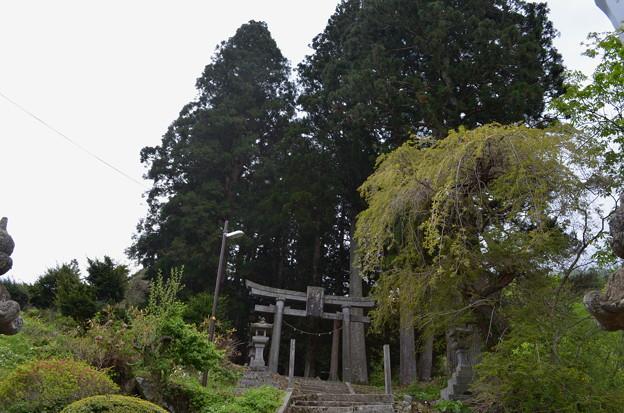 写真: 早池峰神社 大迫・二ノ鳥居