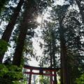 写真: 出羽神社・山頂鳥居