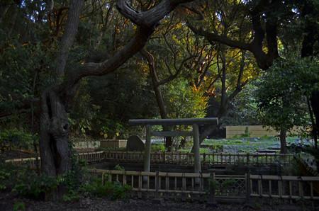 大洗磯前神社・神池