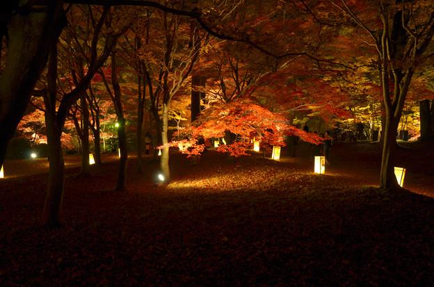 森林公園ライトアップ2