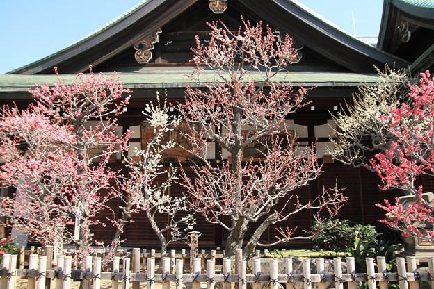 IMG_1095大阪天満宮・梅花殿・梅