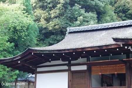 宇治上神社 拝殿屋根2012年08月13日_DSC_0289