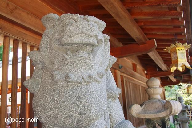 櫛田神社中門の狛犬2012年08月18日_DSC_0550