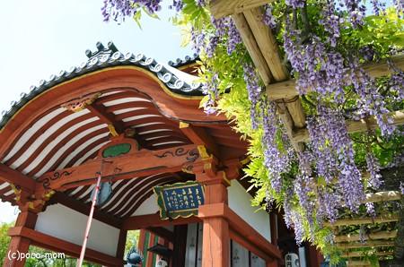 南円堂2013年04月29日_DSC_0231