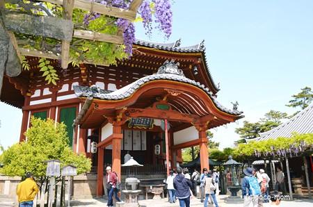 南円堂と藤2013年04月29日_DSC_0234
