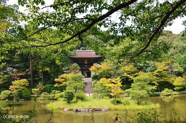 写真: 忍辱山 円成寺2013年08月16日_DSC_0291
