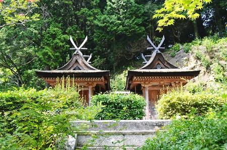 円成寺2013年08月16日_DSC_0306