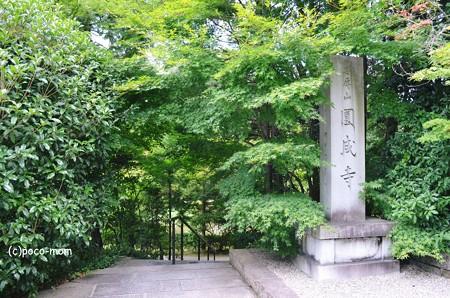 円成寺2013年08月16日_DSC_0320