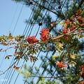 Photos: ナナカマド2013年10月13日_DSC_0777
