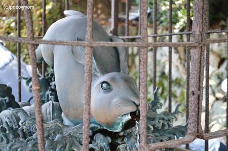 滋賀 三尾神社 うさぎの手水2014年02月09日_DSC_0016