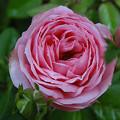 写真: 8miyako24081004 (563x422)