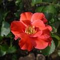 写真: 4izumu24081105 (563x422)