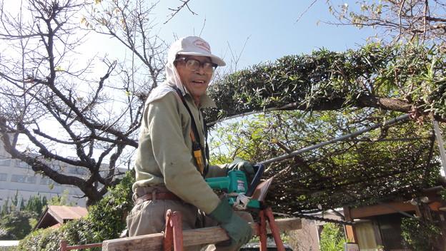 84歳の庭師?3
