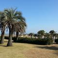 写真: サンビーチ一ツ葉1