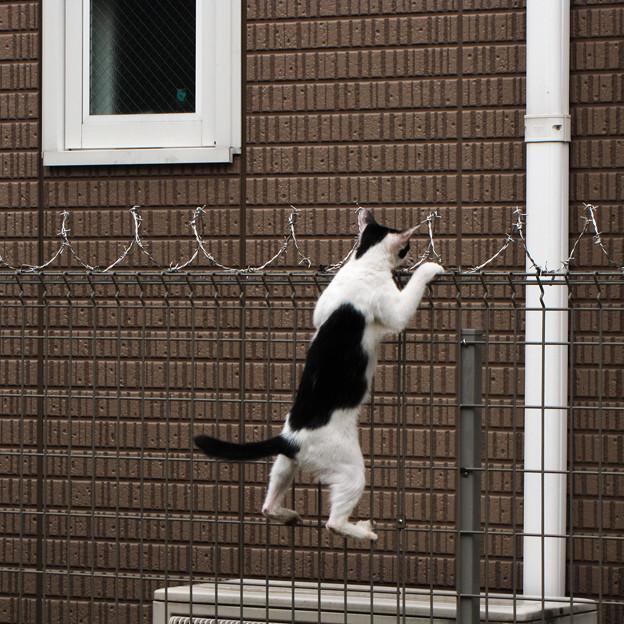猫撮り散歩288