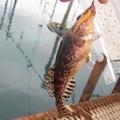 Photos: クジメ