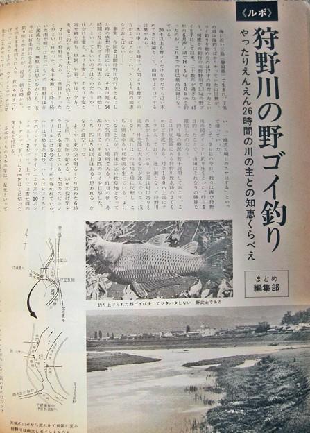 狩野川の野ゴイ釣り