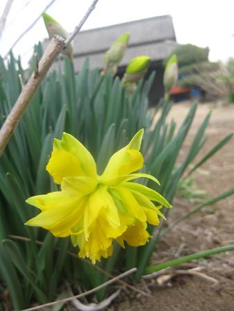 小美玉にも春の足音の巻