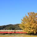 写真: 小湊鐵道 上総久保 大銀杏とキハ200形