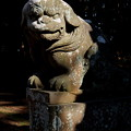 写真: 蛟もう神社 奥の宮 狛犬(阿形)