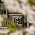 Photos: 桜と熱塩駅