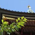 写真: 青葉と塔