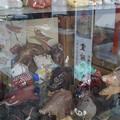 Photos: 数多の猪群、護王社にて