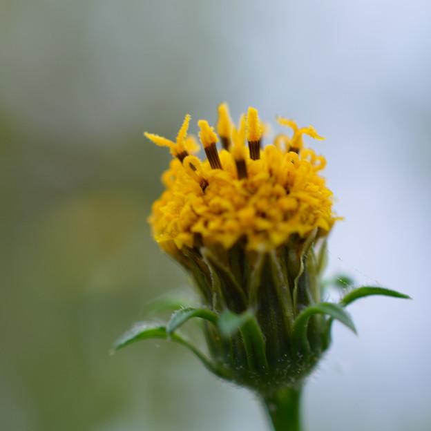 黄色の・・・