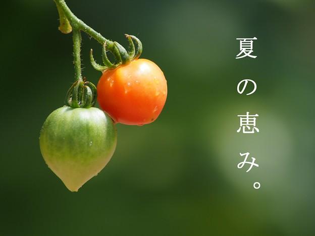 夏の恵み(文字付き)