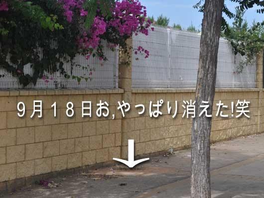 62747_parking-meter