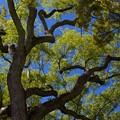 樹の隙間から覗いた青空