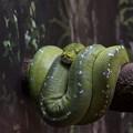Photos: 蛇ってこうやっても眠るんだ