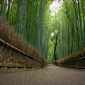 京都嵯峨野の竹林