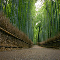 Photos: 京都嵯峨野の竹林