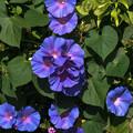 青と紫のグラデーションが気に入りました
