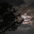 2012/10/30横浜から見た月