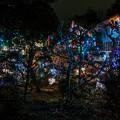 あるお宅の庭のIllumination@SIGMA-DP1s-1