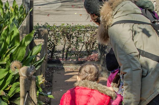 Photos: 栗鼠の館へようこそ